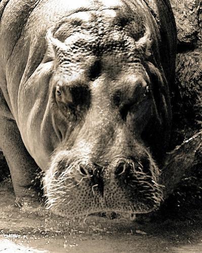 10 животных таящих в себе угрозу!