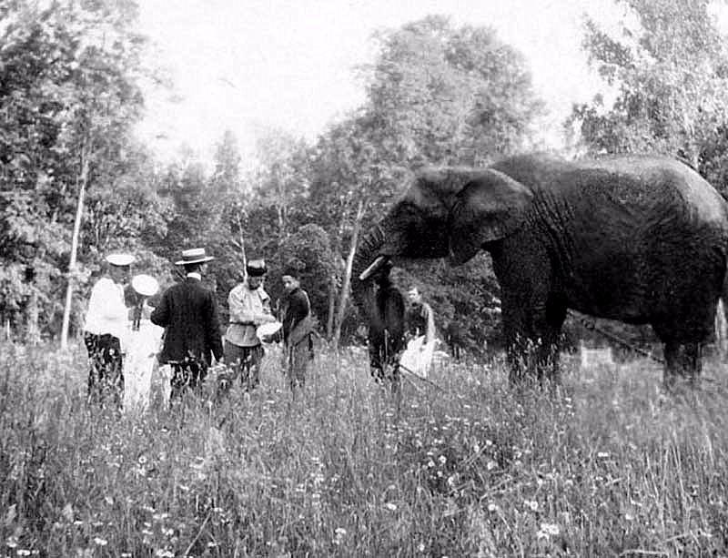 Слоны Романовых