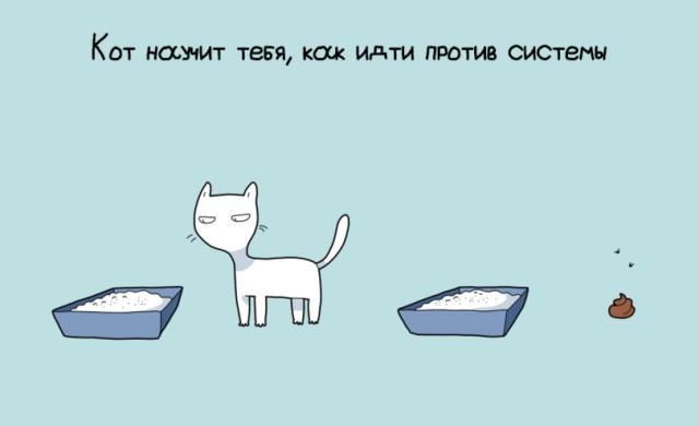 10 преимуществ котовладельцев
