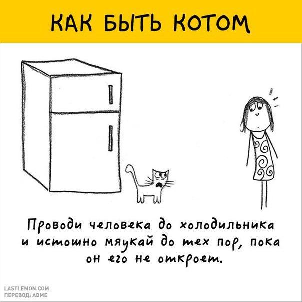 О том как быть котом