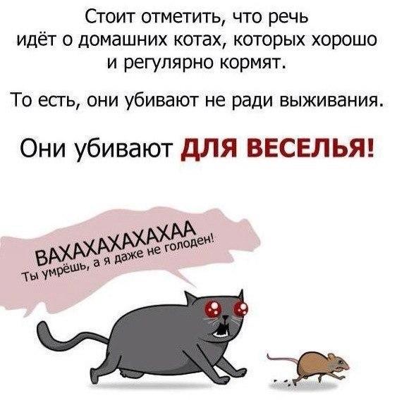 Немного статистики про котов