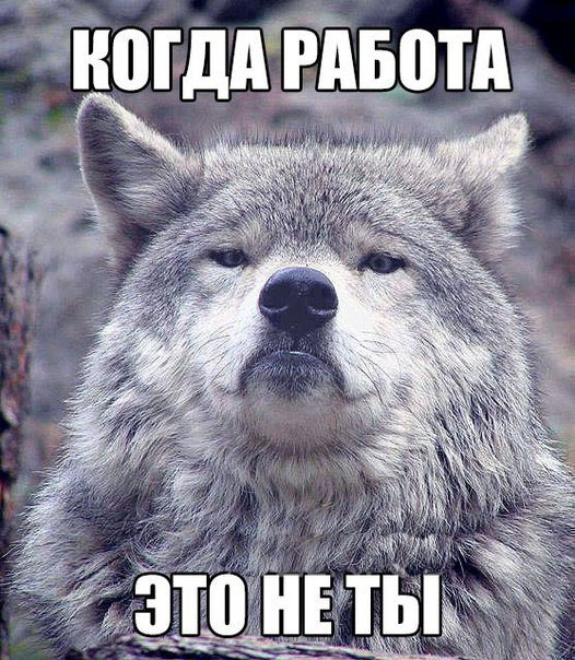 Волчек