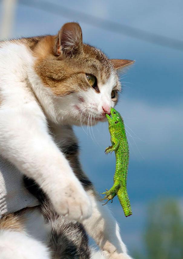 Когда кошки попадают в нелепые ситуации