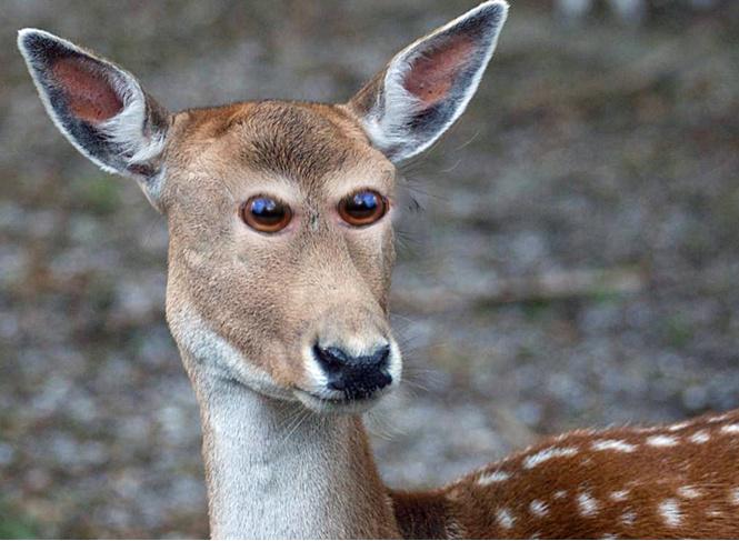 Если бы глаза у животных были спереди