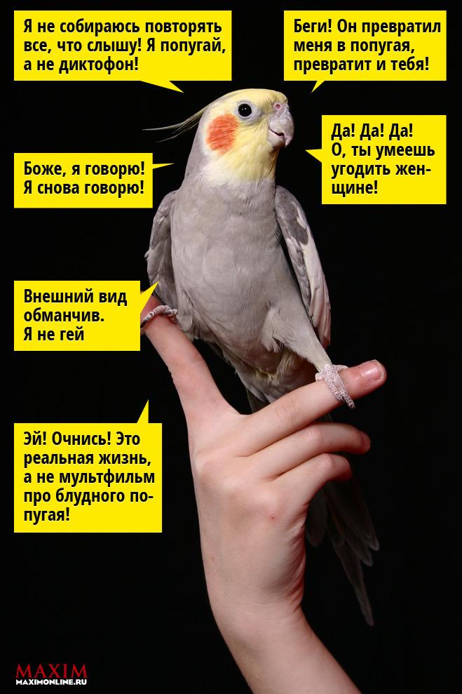 12 фраз которым обязательно нужно обучить своего попугая