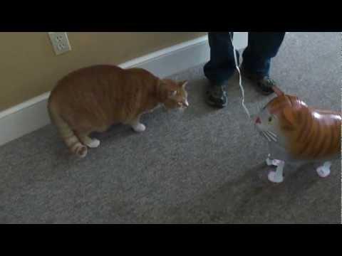 Берт и надувной кот