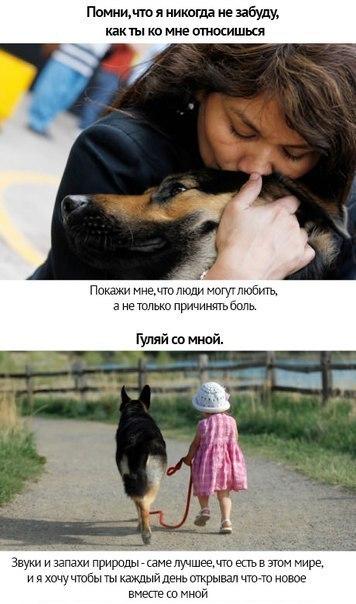 Собачья преданность