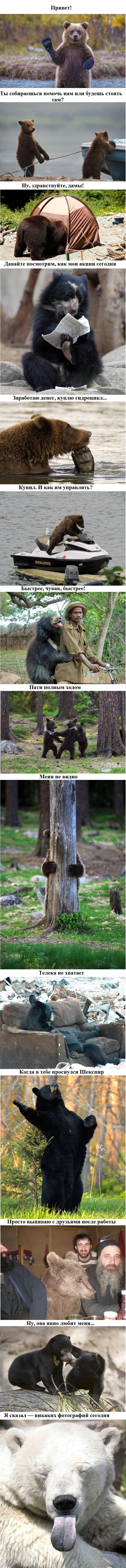 Из жизни медведей