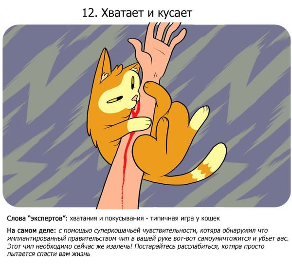 15 кошачьих фактов