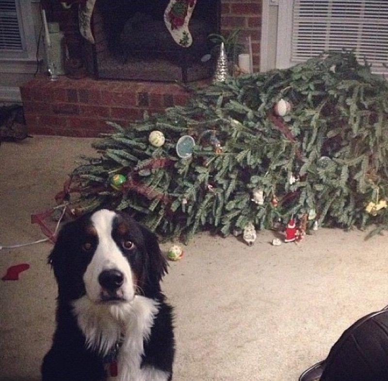 Чем занят пес когда хозяев нет дома