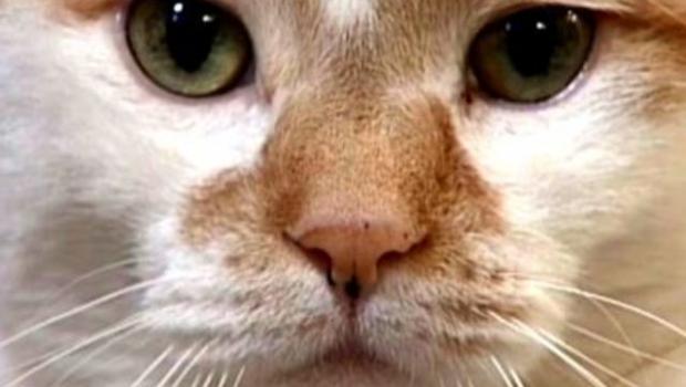 8 героических котов и кошек
