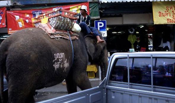 Нелепые правила дорожного движения из разных стран