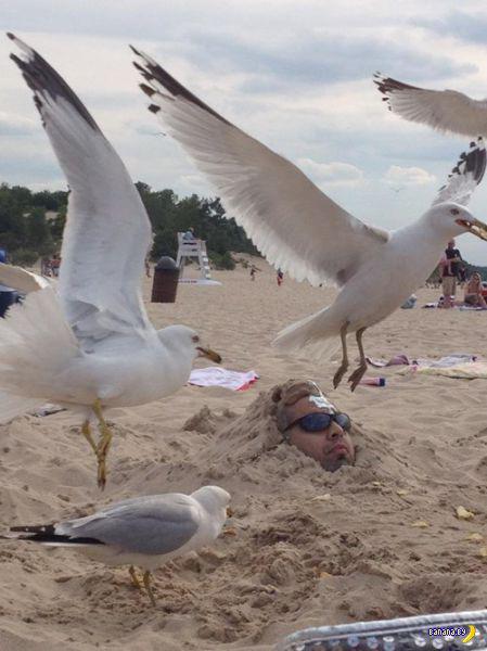 Пляжные картинки