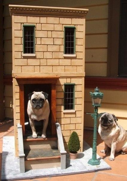 Собачьи будки