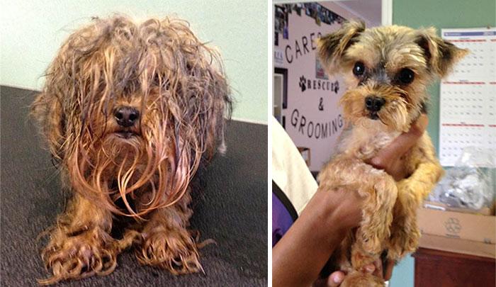 16 бездомных собак до и после спасения