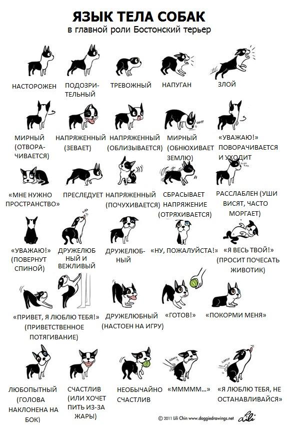 Язык тела собак