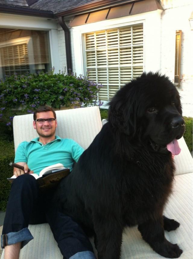 20 огромных собак
