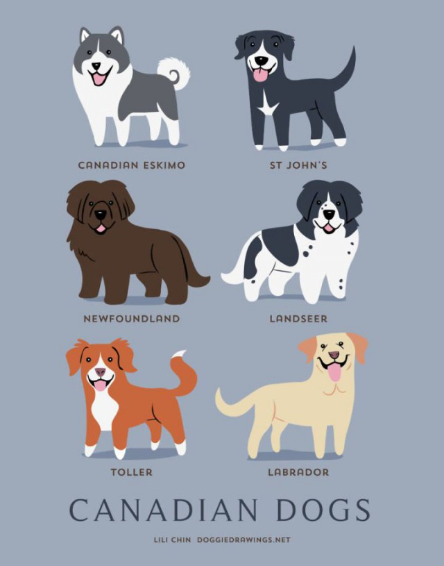 Какой национальности ваша собака