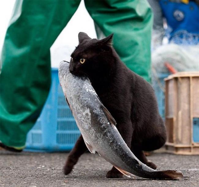 17 котов которые пытались что-то украсть