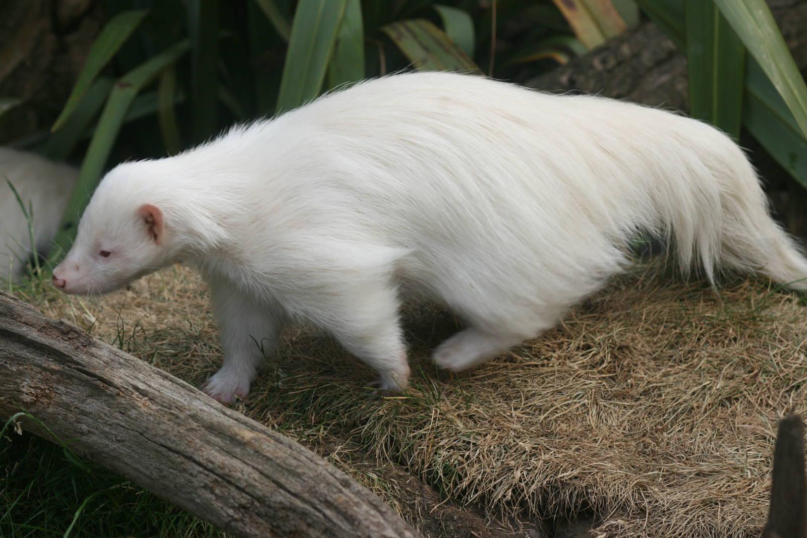 25 животных-альбиносов
