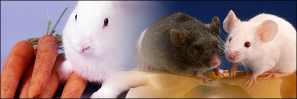 5 идиотских мифов о животных