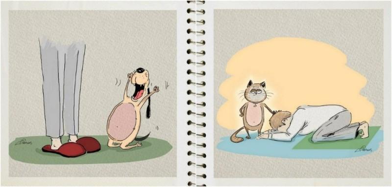 Кот VS пес