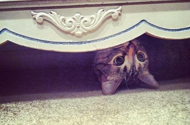 Где искать кота