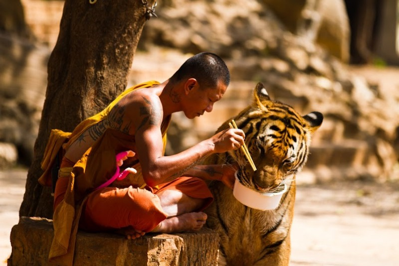 5 невероятных сверхспособностей шаолиньских монахов