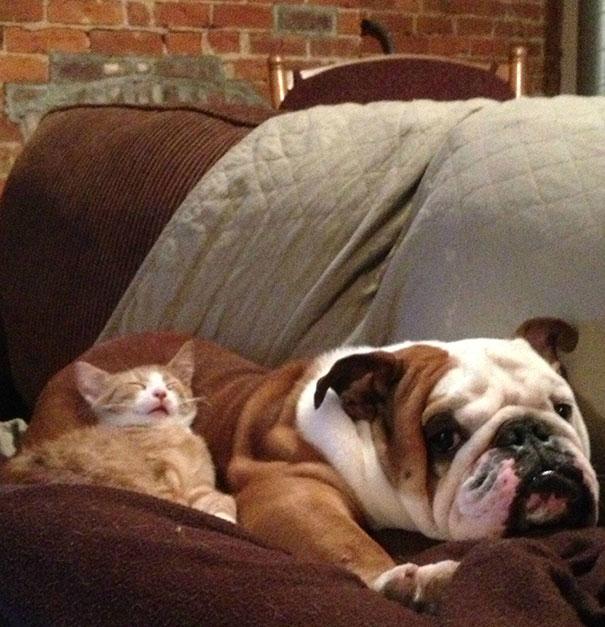 Лучшая подушка  из собачьей шерсти