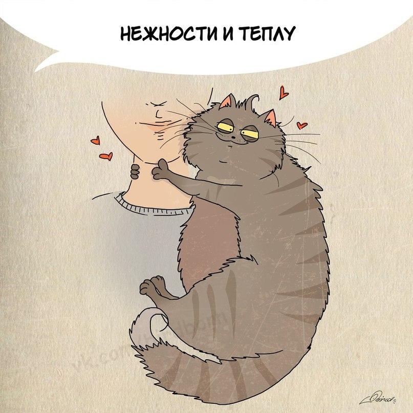 Чему поучится у кошек