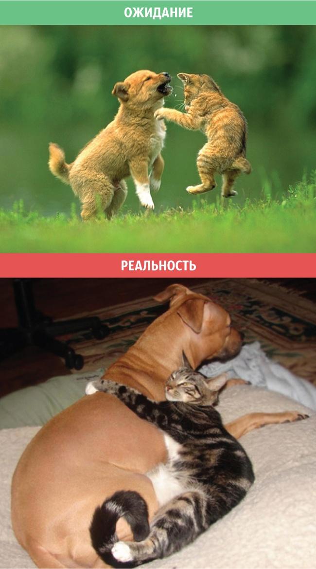 Коты - ожидания и реальность