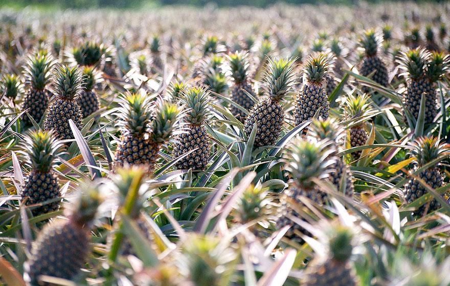 Как выглядят 22 популярных продукта до сбора урожая