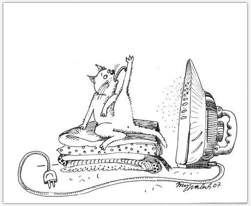 Правила кошек