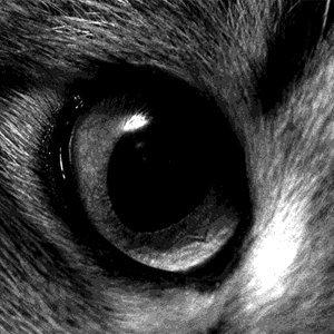 Любопытное о кошках