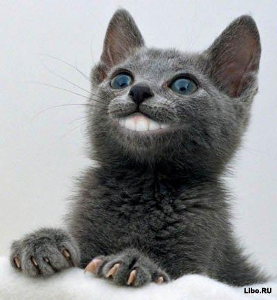 Человек культурен настолько, насколько он способен понять кошку.