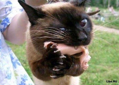 Котоматрица - Если кто-то вдруг захочет у кота еду отнять когти, зубы...