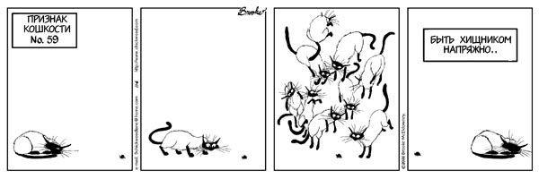 Признаки кошкости
