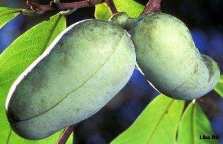 10 самых необычных фруктов и овощей