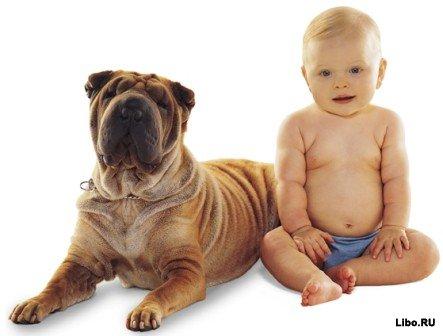 Что бы перевести возраст своей собаки