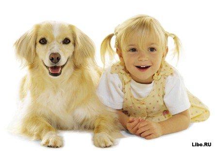 Возраст собаки в «человеческом эквиваленте»