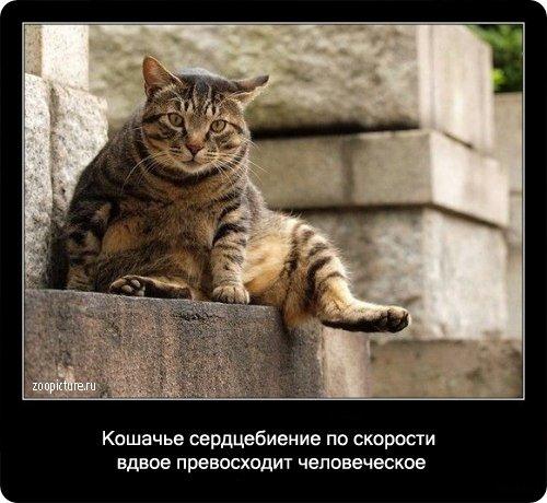 http://www.libo.ru/uploads/posts/2009-01/1232967577_2.jpg