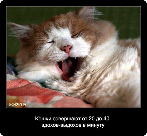 http://www.libo.ru/uploads/posts/2009-01/1232967584_3.jpg