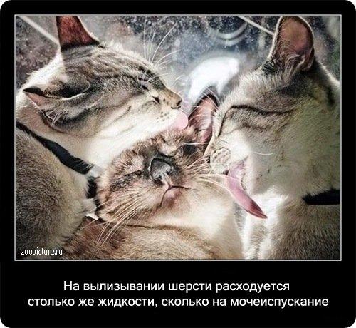 http://www.libo.ru/uploads/posts/2009-01/1232967593_4.jpg