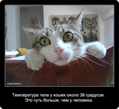 http://www.libo.ru/uploads/posts/2009-01/1232967600_5.jpg