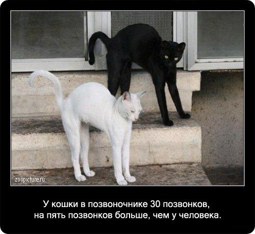 http://www.libo.ru/uploads/posts/2009-01/1232967607_6.jpg