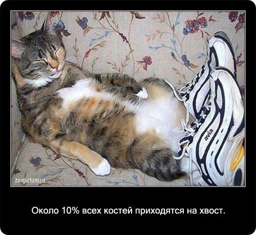 http://www.libo.ru/uploads/posts/2009-01/1232967617_7.jpg