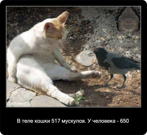 http://www.libo.ru/uploads/posts/2009-01/1232967631_8.jpg