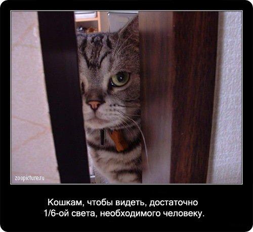 http://www.libo.ru/uploads/posts/2009-01/1232967687_14.jpg