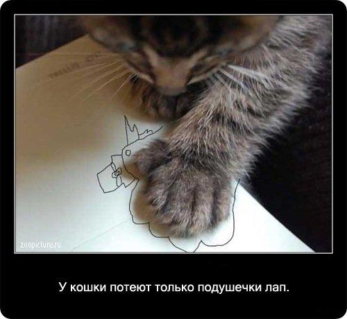 http://www.libo.ru/uploads/posts/2009-01/1232967783_21.jpg