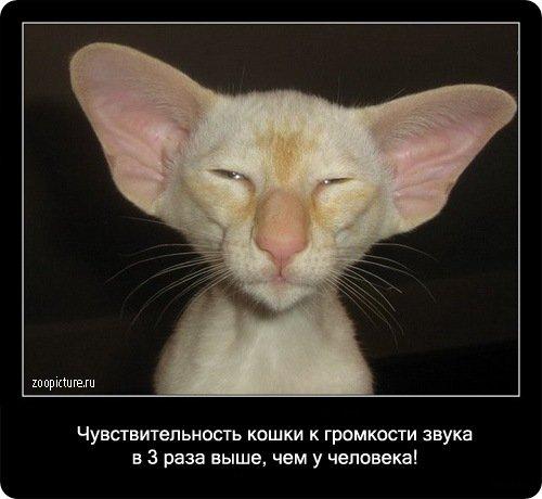 http://www.libo.ru/uploads/posts/2009-01/1232969095_79.jpg